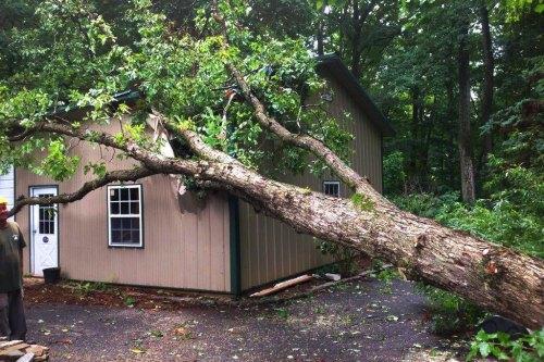 319-treeservice1