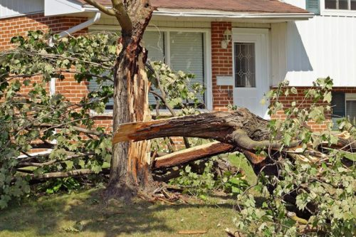 All-About-Emergency-Tree-Removal-Service-in-Dallas-Fort-Worth-Area-780x625